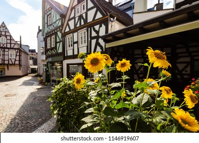 Sunflowers and the famous half-timbered houses in Linz am Rhein, Germany