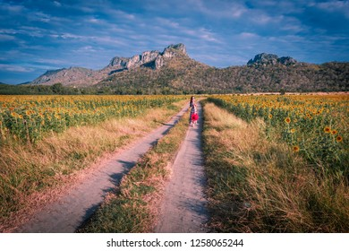 Sunflowers field at Khao Jeen Lae,Lopburi Province,Thailand
