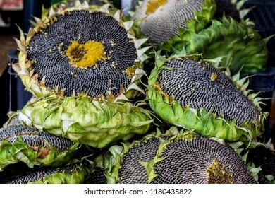 sunflowers harvesting - source of vitamins or bird food