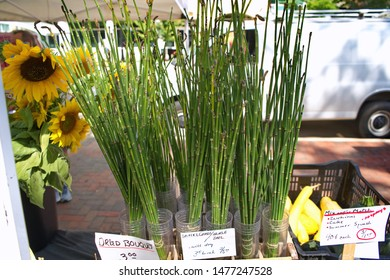 Sunflowers, horsetails, and snake grass plants on sale at a farmers market.