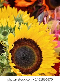 Sunflowers at a local farmer's market.