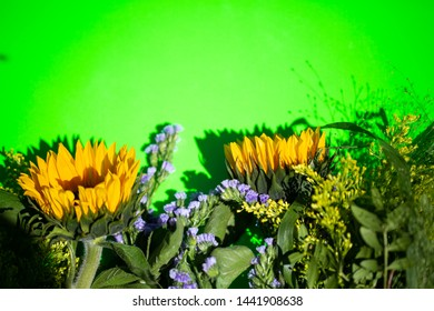 Sunflowers on a green background, copy space