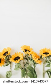 Sunflowers on white background. Flat lay, top view minimal floral composition.