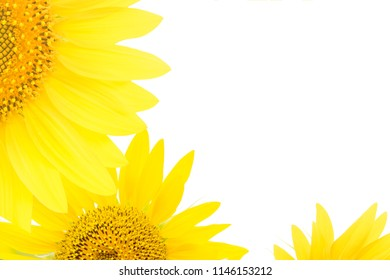 Sunflowers on a white isolated background. Copy space wallpaper