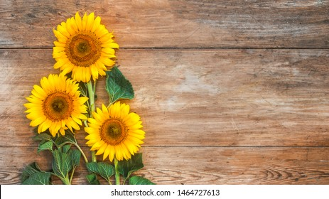 Sunflowers on a wood background. Copy space. Top view. Autumn concept.