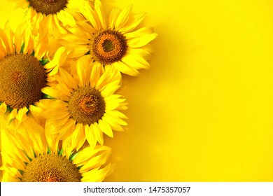 Sunflowers on a yellow background with copy space. Floral close-up. Flat lay top-down composition with beautiful sunflowers. Top view of five sunflowers.