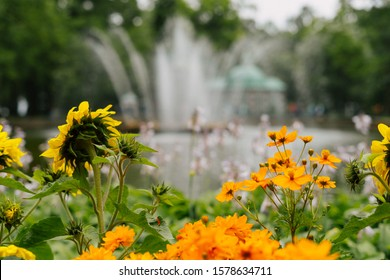 Sunflowers and Orange Flowers Growing in Garden  Russia. Fountain Water Stream and Pool, Building and Natural Green Trees on Blurred Background