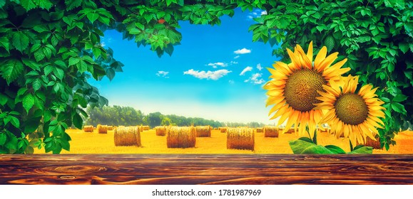 Sunflowers over field background, natural foliage frame. Summer outdoor view on the wheat field photo collage