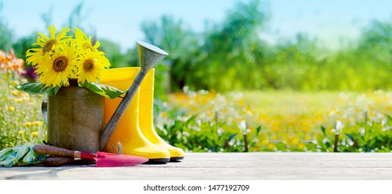 sunflowers over summer garden background