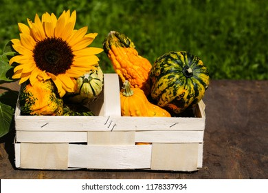 sunflowers and pumpkin in a basket