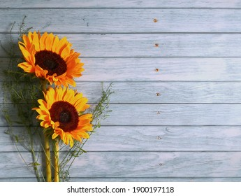 Sunflowers sitting on blue wooden surface shot from above with space for text. Top view, flat lay, copy space. Summer background. Mother`s day card template.