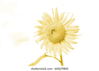 sunflowers are style gold-yellow.