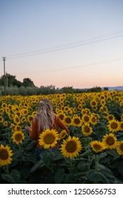 sunflowers in toscany
