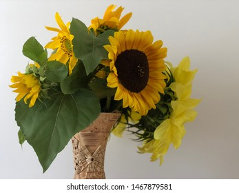 Sunflowers in vase with white background