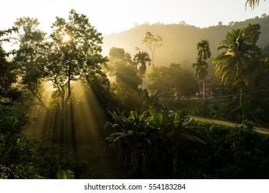 Sungai Lembing Pahang Light Rays through the trees