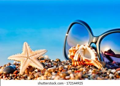 sunglasses and marine life on the beach