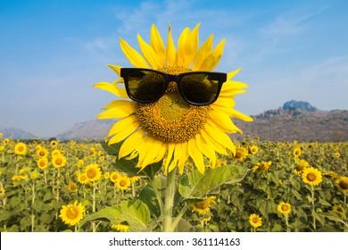 sunglasses sunflowers smile