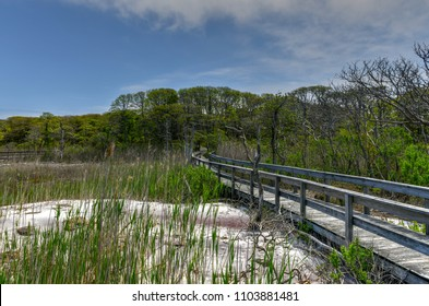 Sunken Forest in Fire Island, Long Island, New York. It is a rare ecological community of maritime holly forest comprised of a rare assemblage of plants on a barrier island in the Atlantic Ocean.