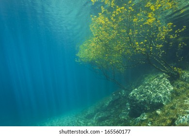 Sunken Nature Park Underwater. Clean water, made from melted snow from Alps in Austria, Gruener See.