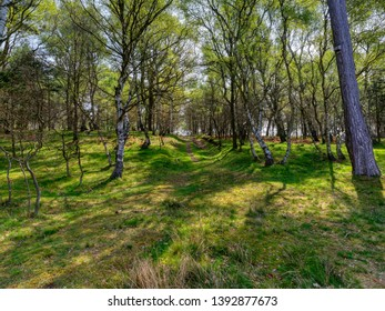 A sunken path climbs up hill between the trees of Sherwood forest on a spring morning