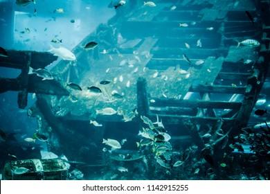 Sunken ship with marine life in aquarium.