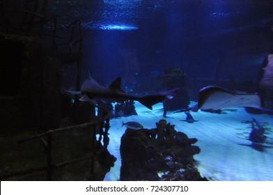 sunken ship, shark and thornback ray deep in water