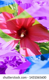 Sunkissed flower with colorful design.