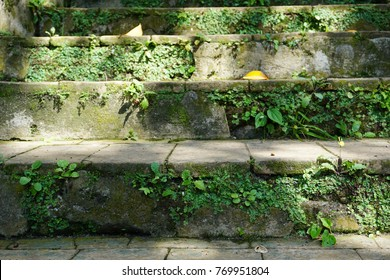 Sunkissed mossy stairs