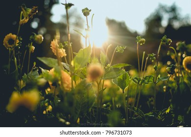 Sunlight against yellow floers