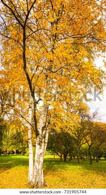 Sunlight in the autumn forest. Autumn landscape