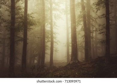 sunlight in autumn forest with trees in mist