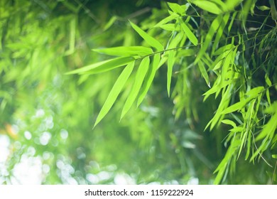 sunlight and bamboo leaves