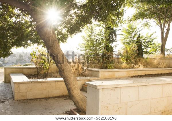 sunlight-beam-between-leaves-tree-600w-5
