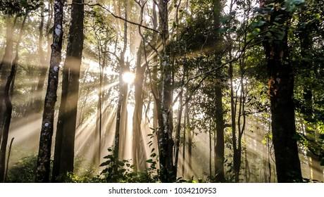 Sunlight beam trough foliage at Phulangga, on the way up to Phulangga, Payao Province, Thailand. Showing beautiful experience at Phulangga Nature park.