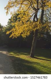 sunlight at beautiful yellow leaves of autumn treeat Vondelpark in Amsterdam