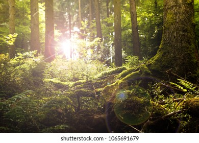 sunlight between trees in the dark forest, mossy floor in the foreground