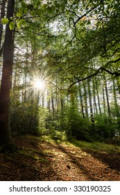 Sunlight breaking through a gap in the trees in a wooded area/woods/forest