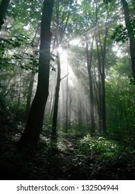 Sunlight breaks through the trees on the Appalachian Trail.