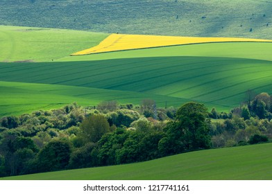 Sunlight bursts over a field of rapeseed on the South Downs close to Lewes