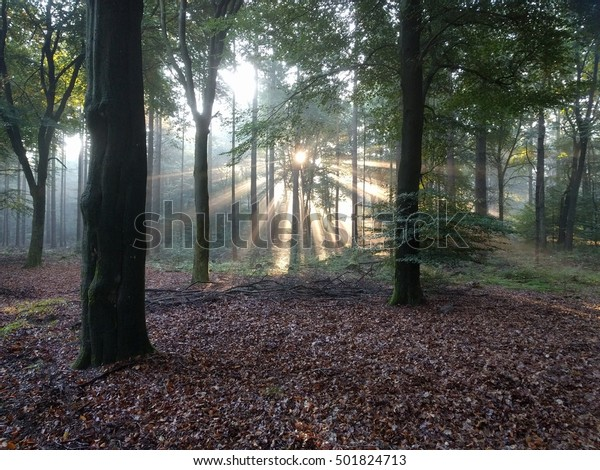 Sunlight, celestial rays penetrate the centre of a beech forest