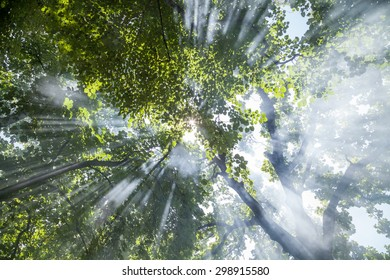 Sunlight coming through the leaves of trees in urban garden. Concept for environmental protection