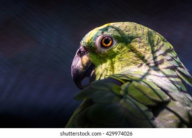 Sunlight dropping on dark parrot cage