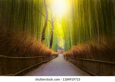Sunlight at the end of walkway bamboo tunnel named Arashiyama bamboo forest in Kyoto, Tourist landmark of Japan