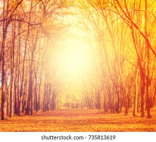 Sunlight fall Autumn leaves decorate a beautiful nature bokeh background with forest ground