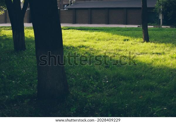sunlight-falls-on-grass-between-600w-202
