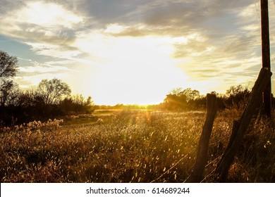 Sunlight Field