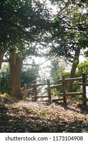 Sunlight filtering down through the trees, Komorebi