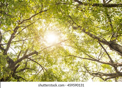Sunlight filtering through the leaves of trees on jet. Concept for environmental protection