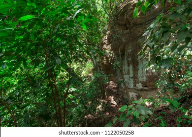 Sunlight filters through dense jungle canopy over rocky cliff in tropical rainforest in Chiapas, Mexico