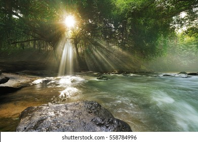 sunlight filters through the trees to the river